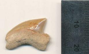 Археологи нашли историческое сокровище эпохи царя Соломона