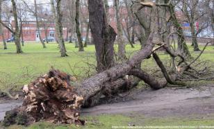 Штормовой ветер в Москве повалил 125 деревьев, один человек погиб