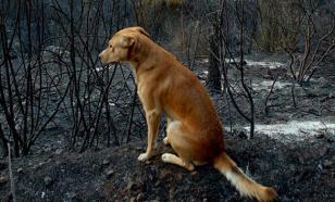 В США пес нашел пропавшего в лесу малыша и привел его к людям