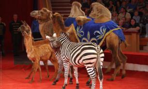 Медведев подписал новые требования по содержанию животных в цирках
