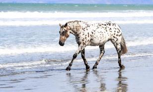 Обозреватели Fox News восхитились спасением лошадей в России