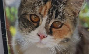 Специалисты просят не пугать котов огурцами