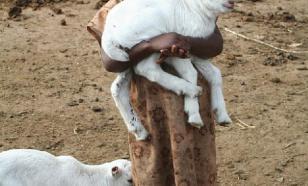 Кения – национальный парк нищеты