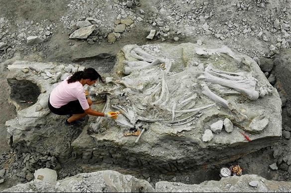 Археологи обнаружили в Баварии огромный бивень мамонта