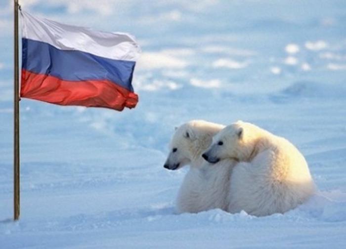 """Читатели немецкой газеты: """"народишко"""" России должен забыть об Арктике"""