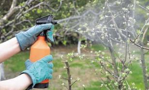 """Против фитофторы и не только: все же """"химия"""" в саду нужна"""