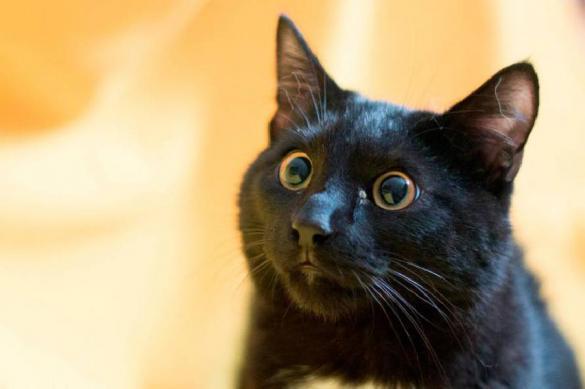 Итальянцы защищают черных кошек