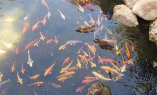 Язык жестов знаком даже рыбам