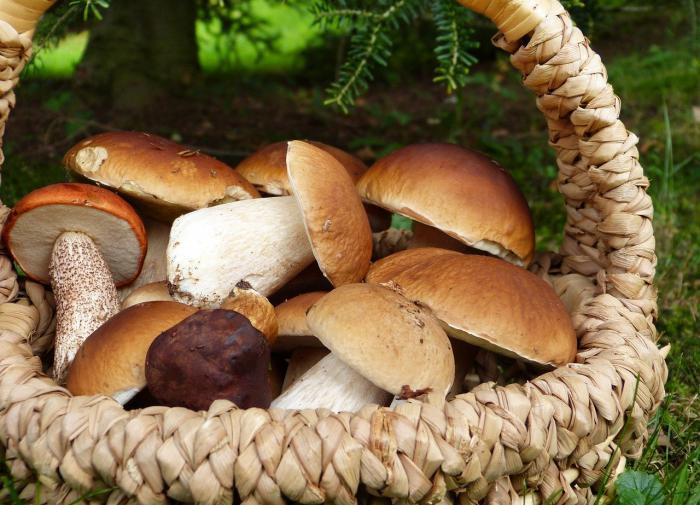 В России ужесточили правила сбора грибов