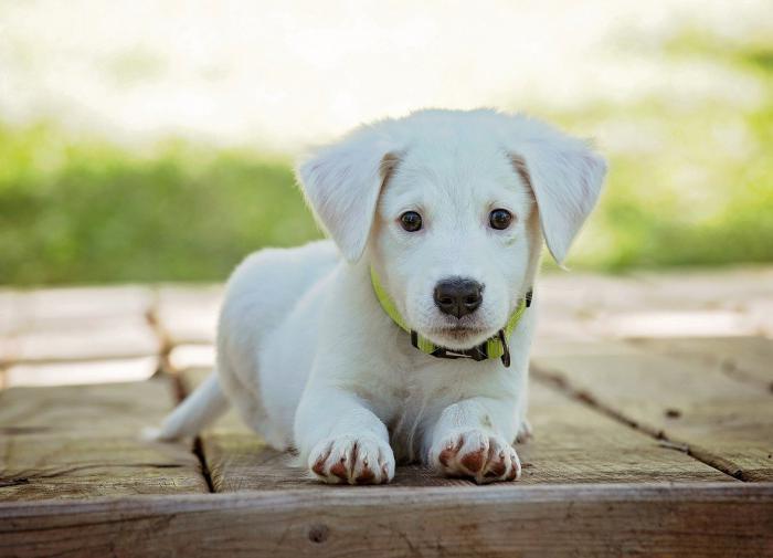 Названа самая популярная кличка для собак в России