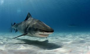 В Австралии беспилотники будут спасать туристов от акул