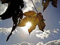 Прогнозы: солнце разогреет Москву до 22 градусов.