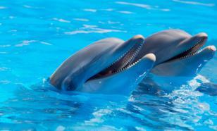 Дельфины способны к социальному обучению