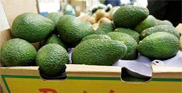 Авокадо: пять причин, чтобы съесть один сегодня и каждый день