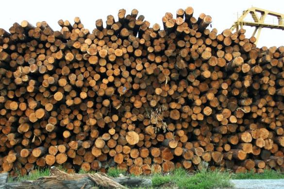 """""""Черные лесорубы"""" на Кубани уничтожили лес на 25 млн рублей"""