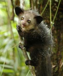 Пять фактов о самом загадочном животном на планете