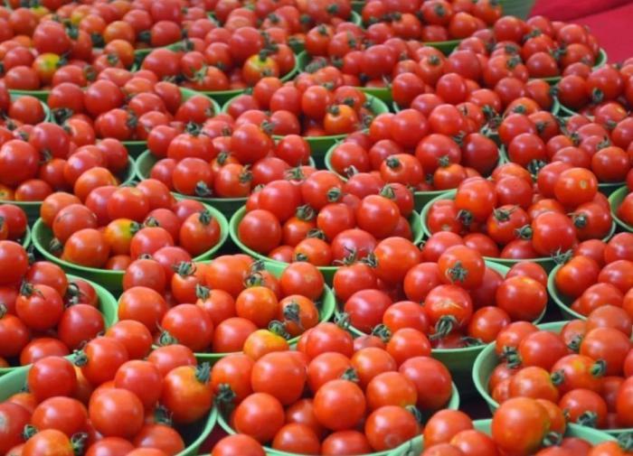 Способ посадки помидоров с гарантированным урожаем