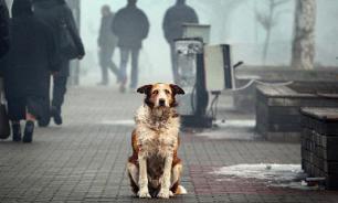 В Якутии могут ввести налог на собак