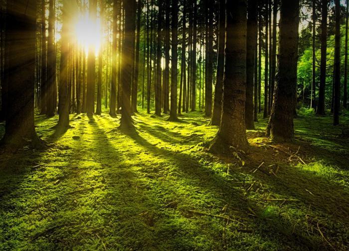 Просмотр передач о природе улучшает настроение
