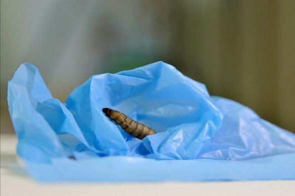 На борьбу с загрязнением окружающей среды выходят гусеницы