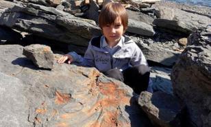 На острове Русском школьник нашёл окаменелость ихтиозавра
