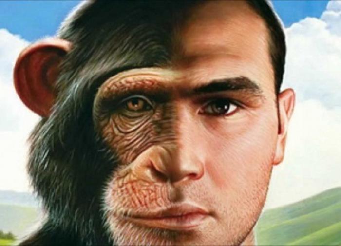 Кто и как скрещивал обезьян с людьми