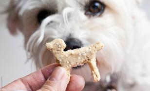 Какое лакомство давать собаке?