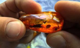 Янтарь помог палеонтологам определить цвет древних насекомых