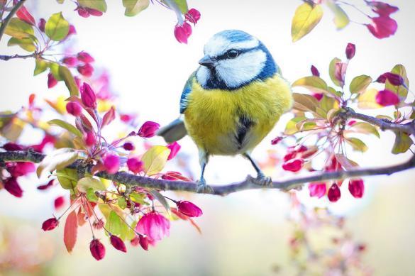 Птицы разных видов способны понимать друг друга