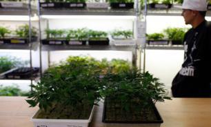 Дурь бывших коммунистов: узаконит ли Канада марихуану