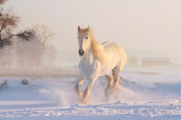 Лошади помогут в борьбе с резким таянием вечной мерзлоты