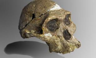 Антропологи выяснили, как развивался мозг австралопитеков