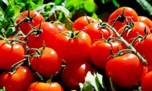 Картофель и помидоры могут быть опасными для здоровья