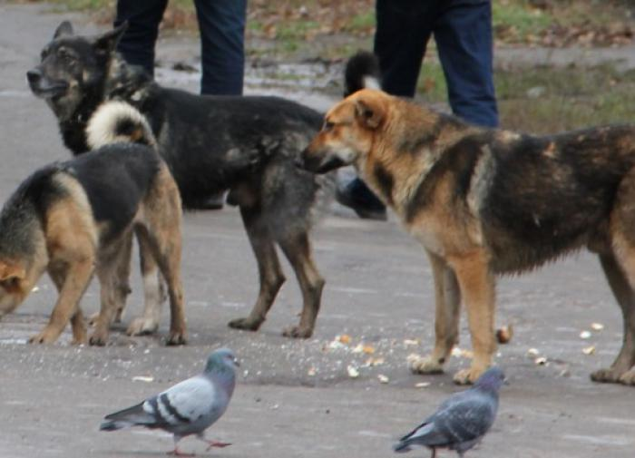 В Скопине бродячая собака напала на шестерых детей