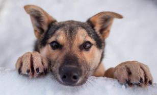 Ульяновские спасатели вытащили из Свияги двух тонущих собак
