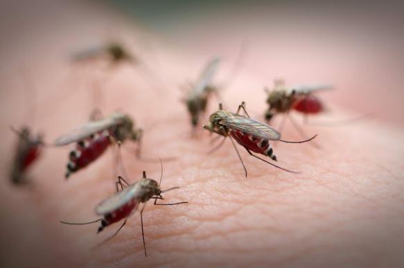 СМИ: ученые отучили комаров постоянно пить кровь