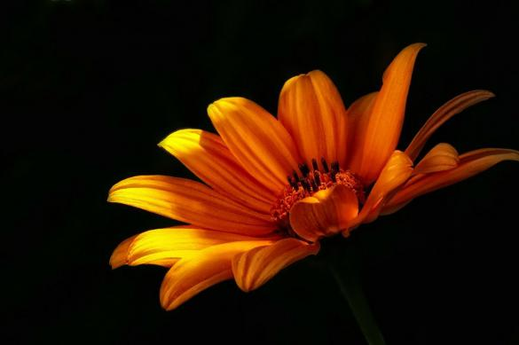 Российские специалисты создали первые светящиеся в темноте растения