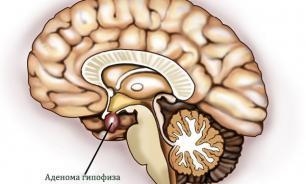 Причины, по которым в гипофизе прекращается выработка гормонов
