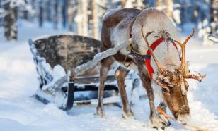 Олень помешал учениям финской армии