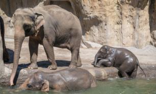 В Индии слоненка спасли из резервуара для воды. ВИДЕО