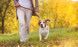 Собаки понимают слова хозяина и повторяют его эмоции