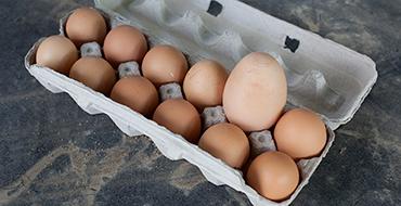 Галина Бобылева: Россия обеспечивает себя пищевыми яйцами на 100%