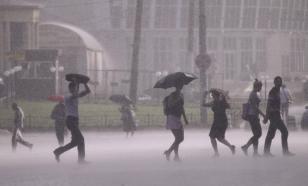 В Москве упавшее от порыва ветра дерево покалечило трех прохожих