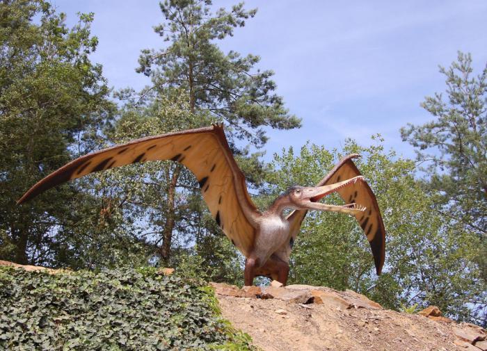 У птерозавров была гладкая кожа - палеонтологи