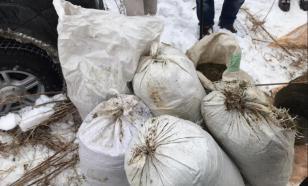В Приамурье полицейские изъяли почти 70 кг марихуаны и гашишного масла