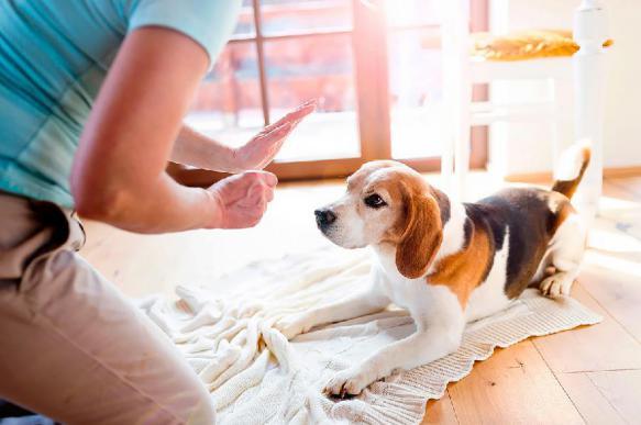 Собаки обладают человеческими способностями к счету