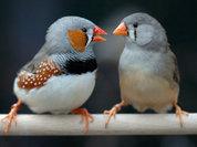 Дети и птенцы учатся общаться одинаково