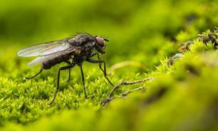 Луч света от экрана смартфона способен убить муху