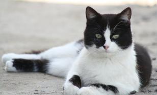"""""""Кот в мешке"""": мусорщик спас кота, выброшенного на свалку"""