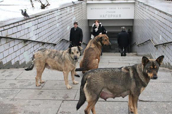 Стало известно, как избежать агрессии и укусов бродячих собак